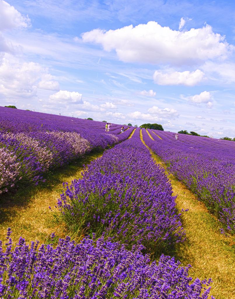 Famous Villages Of Provence Road Bike Tour France Tripsite