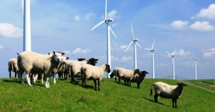 Sheep and wind turbines. Photo courtesy of the Netherlands Board of Tourism
