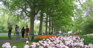 Keukenhof - photo via Flickr:dbaron