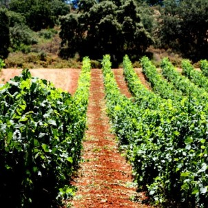 Vineyards in Andalusia